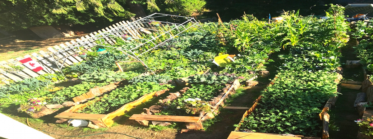 "Agriculture at ""Little Zimbabwe"", Vancouver Island!"